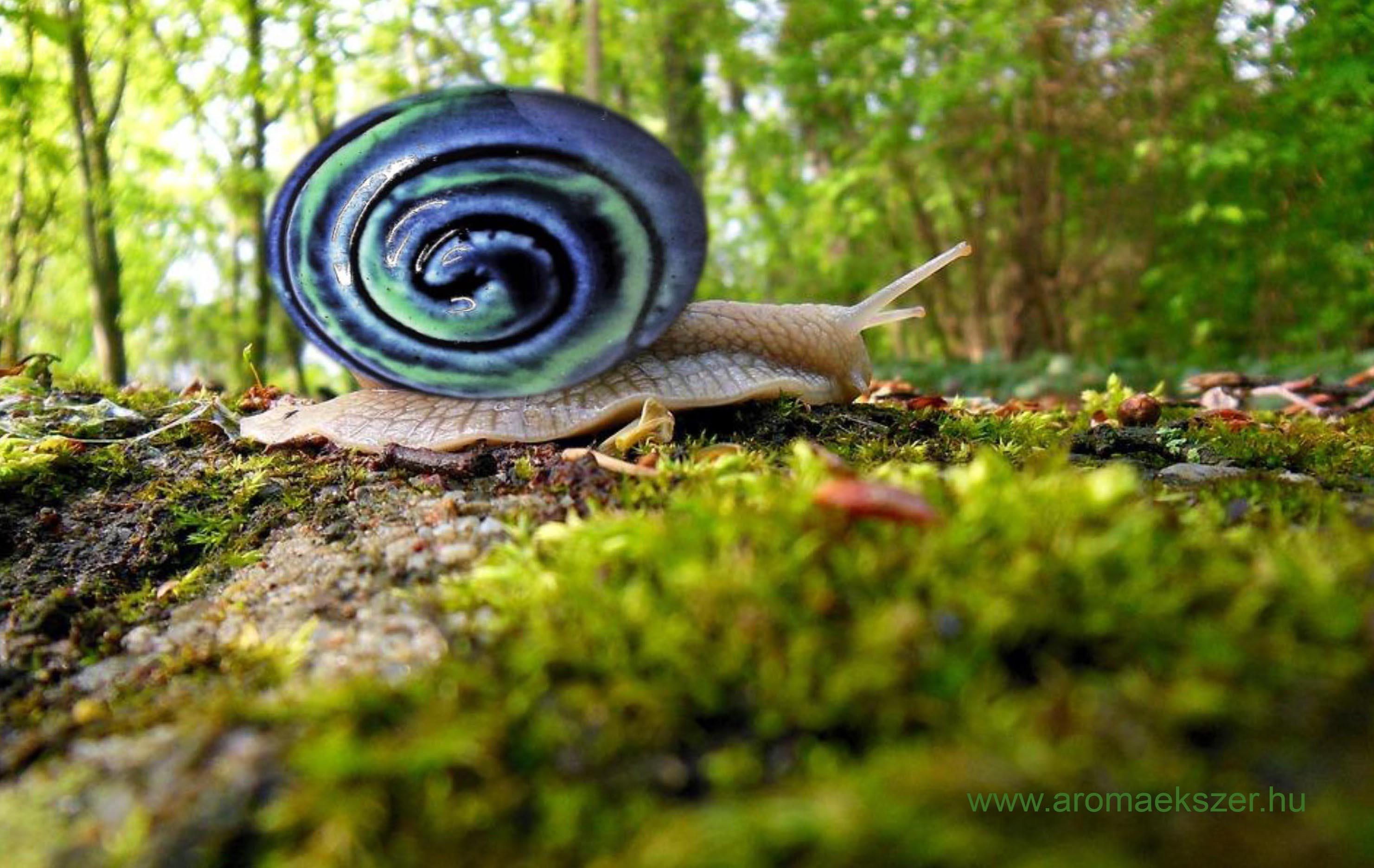 Különleges csiga - www.aromaekszer.hu